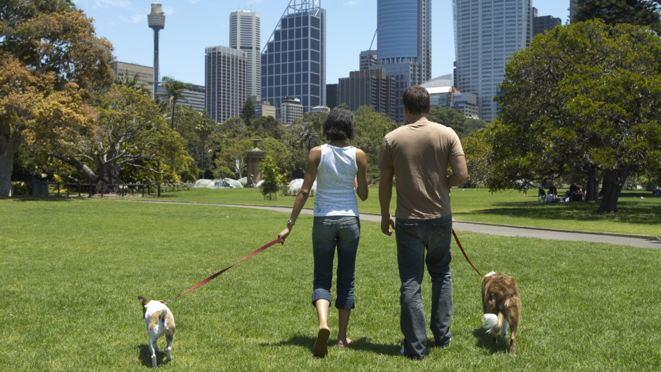 Couple walking dogs through the park