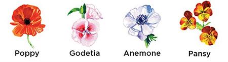 flowers similar to cosmos