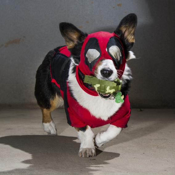 pets in superhero costumes