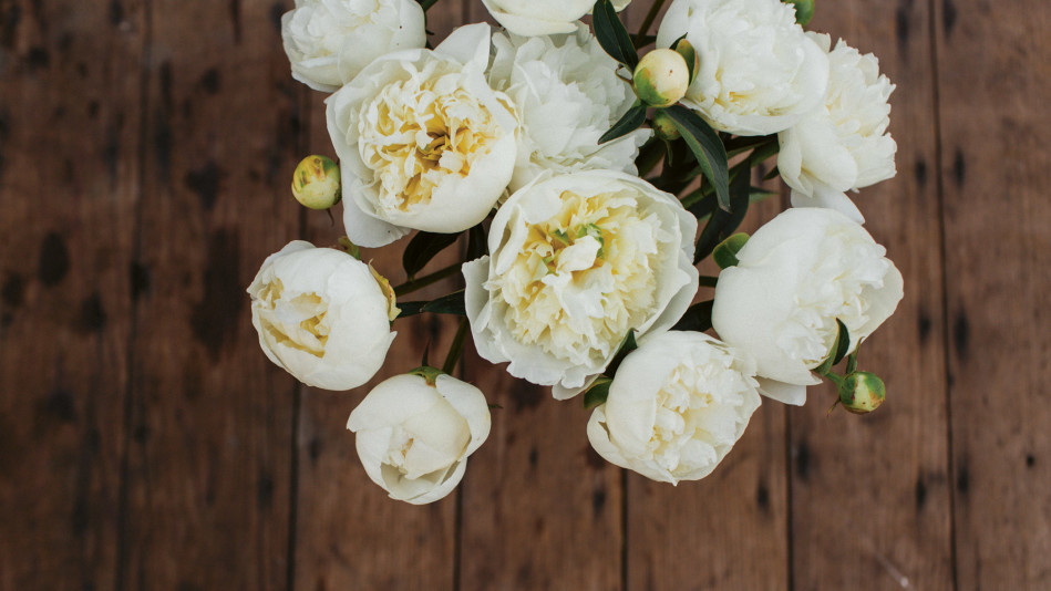 How To Grow And Care For Peonies Floret Farms Advice