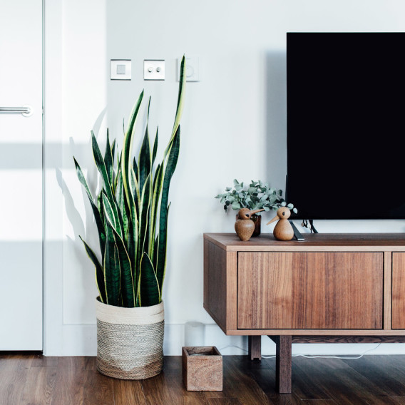 plant to hide cords