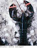 Padma Lakshmi's lobster bruschetta