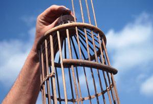 open birdcage
