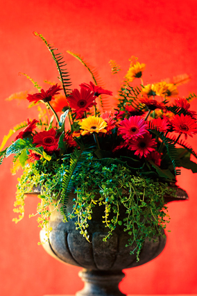 Gerbera daisies, Boston fern, and baby tears
