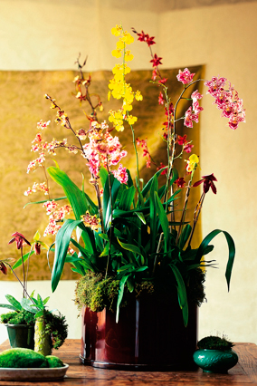 Orchids in assorted vases