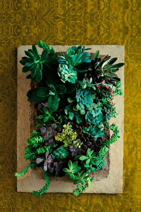 Succulents in a rectangular cement planter