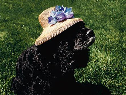 Oprah's dog Sophie