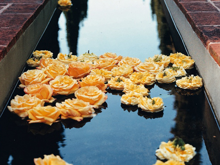 Roses floating in an aqueduct