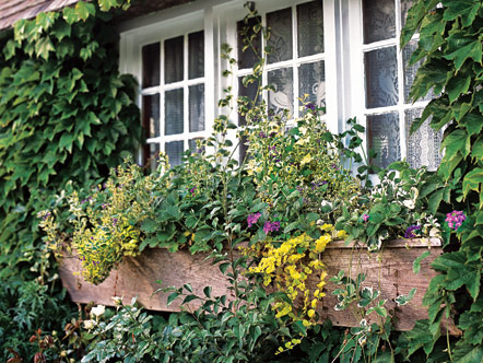 Window box filled with flowers