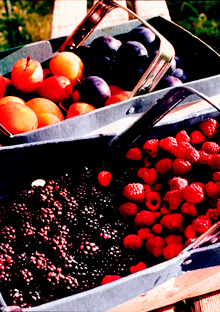 Ripe plums, blackberries, and raspberries