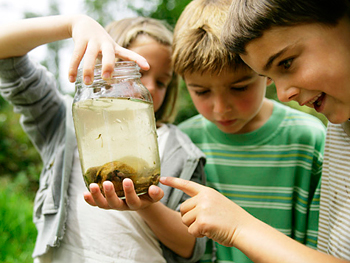 Children looking at a frog in a jar