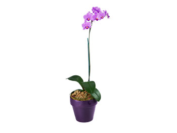 Maria Pinto's favorite things: Orchids