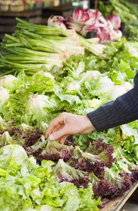 Finding the best lettuce