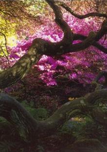Gardener's Labyrinth