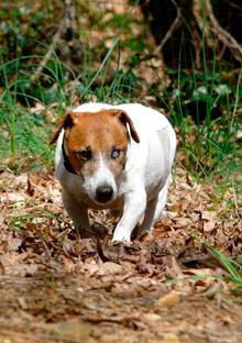 Rescued dog Steve