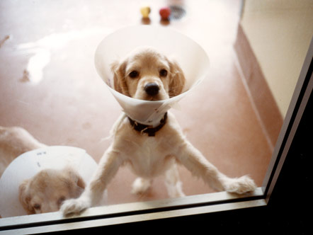 Oprah's puppy Sadie