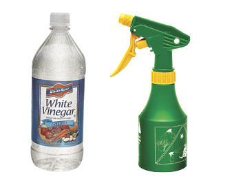 White vinegar and spray bottle