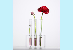 flowers in test tube