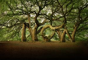 Now trees