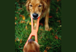Dog pulling on a chew toy