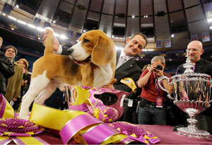 Uno Westminster Dog Show champion