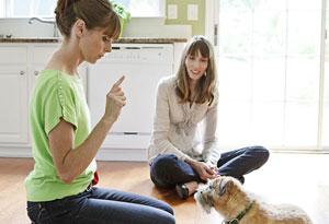 Victoria Stilwell training border terrier