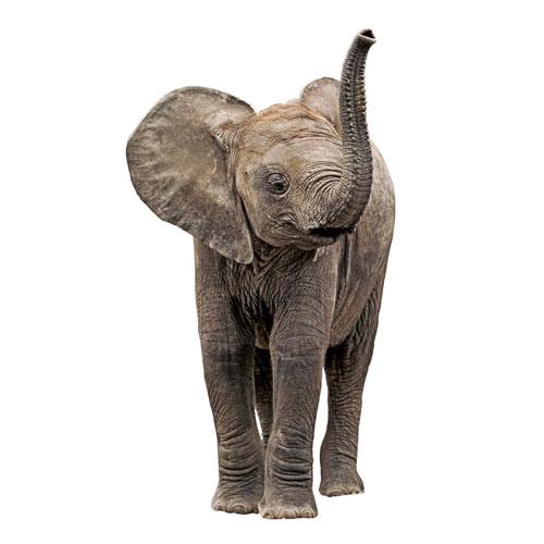 Foster an Orphaned Elephant