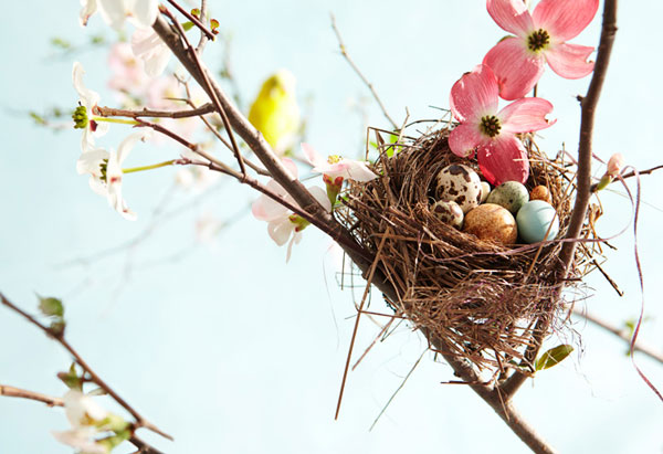 nest branches