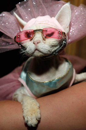 Cat wearing pink glasses
