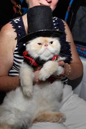 Cat wearing top hat
