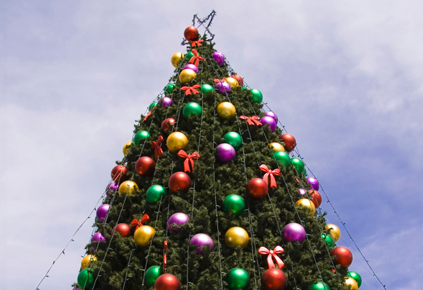 Newman Christmas Trees.Common Holiday Fights And How To Stop Them Leigh Newman