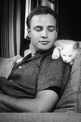 Marlon Brando with a cat