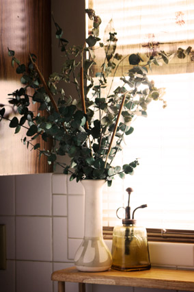 Eucalyptus plant in the bathroom