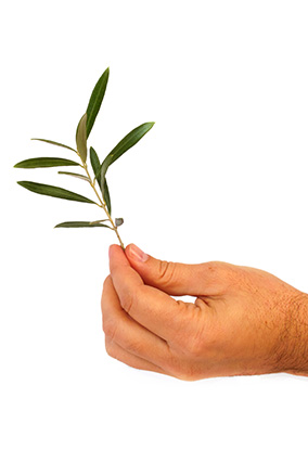 Offering an olive branch