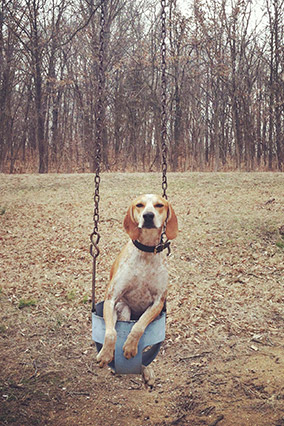 Maddie the dog on a swing