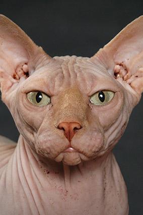 A very evil cat