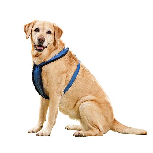 Auto Safety Vest Harness
