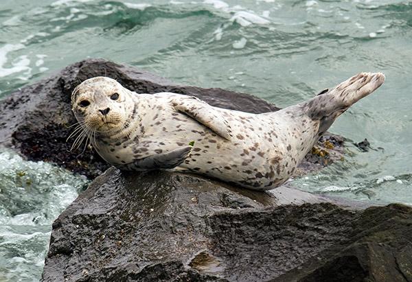 seal sitter