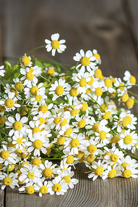 Feverfew and ginger
