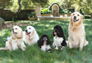 Oprah's Pets