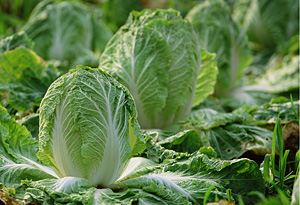 Get Bob Greene's Best Life tips for growing your own greens.