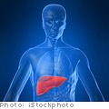 Get to know your liver