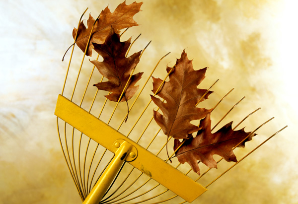 Leaves on a rake