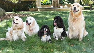 Oprah's Pets