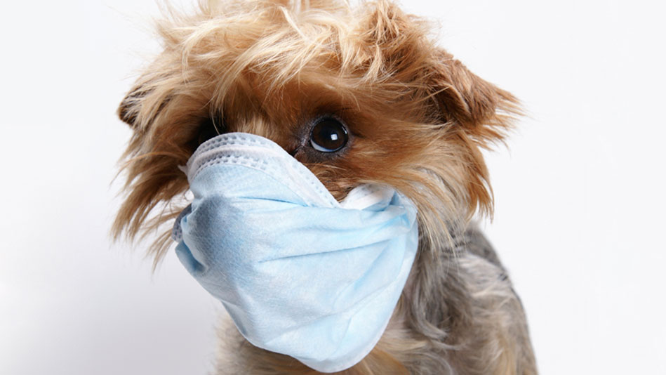 Sickness Dogs Can Get