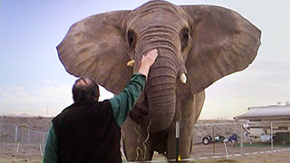 <i>One Lucky Elephant</i> - Trailer