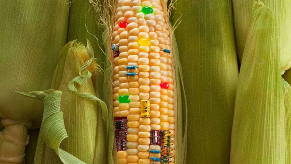 genetic engineering in food production essay Submit your essay for analysis on genetic modification of food in the article engineering food for all of the genetic engineering of food.