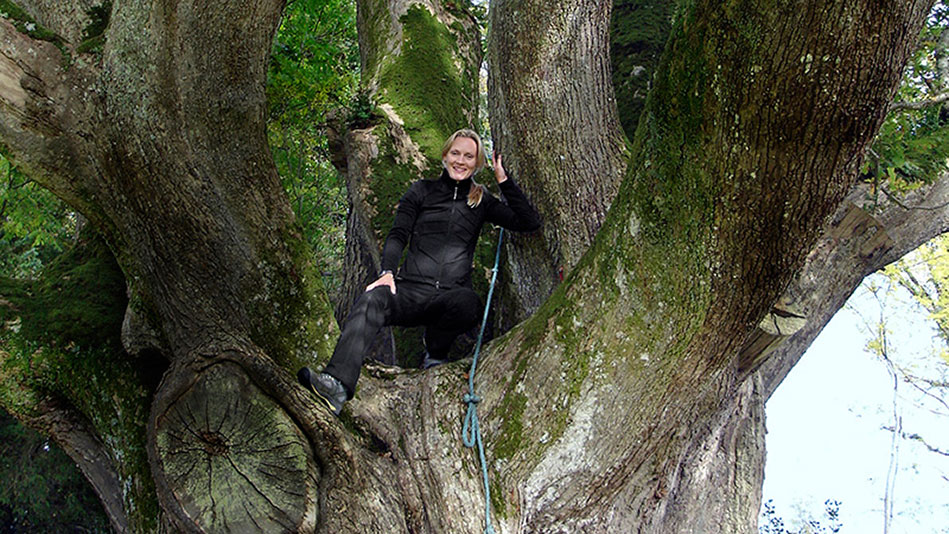 Out on a Limb: Cloning the Oldest Trees in the World