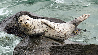 Cool Job: Babysitting Seals in Seattle