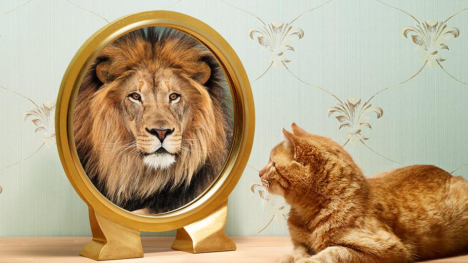 201405-omag-lion-949x534.jpg